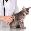 Ветеринарные клиники в Нарьян-Маре